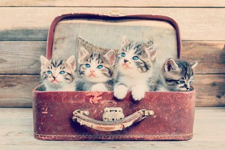 Herding Kittens _ Brandle blog post on social sales teams